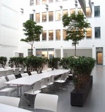 jardinera de piedra rectangular moderna para espacio pblico dracaena artaqua