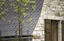 Tablilla de madera / para techado