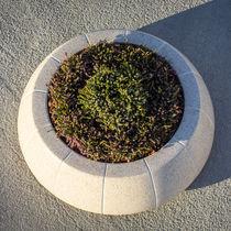 Jardinera de hormigón / de madera / de mármol / de piedra natural