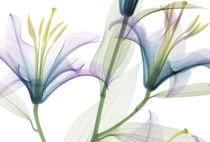 Papeles pintados modernos / con motivos florales / sin tejer / impresos