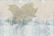 Papeles pintados modernos / de vinilo / con motivos de la naturaleza