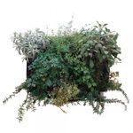 marco vegetal estabilizado / de feuillage / biológico / de interior