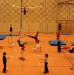 pavimento deportivo de linóleo / para interior / para sala polideportiva