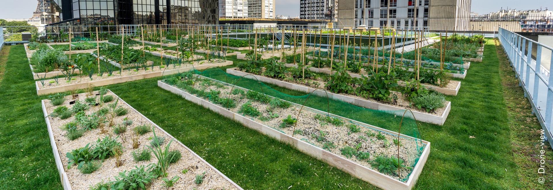 """El jardín de tejado agrícola urbano en el tejado de """"Le cordon bleu"""" en París"""