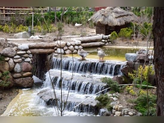 Jardín del pájaro de Lavizan
