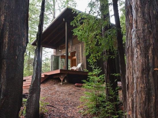 cabina de la madera con la red de las cubiertas suspendidas entre las secoyas de California