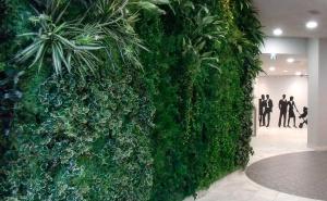 Vegetalización de interior y exterior