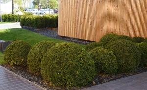 Decoración y mantenimiento de espacios verdes