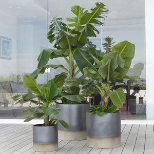 maceta de jardín de terracota / redonda / para uso residencial / para el sector servicios