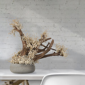 planta ornamental estabilizada