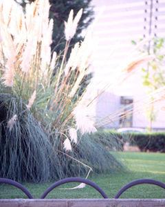 borde de jardín / de hierro fundido / curvado
