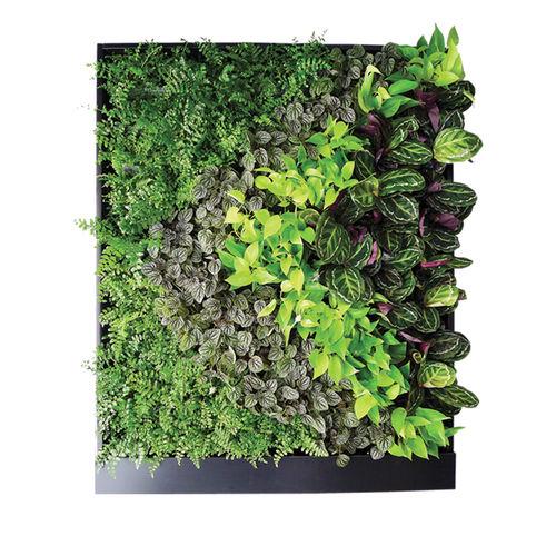 marco vegetal de plantas naturales