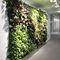 muro vegetal de interior