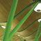 falso techo de bambú