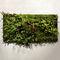 marco vegetal biológico