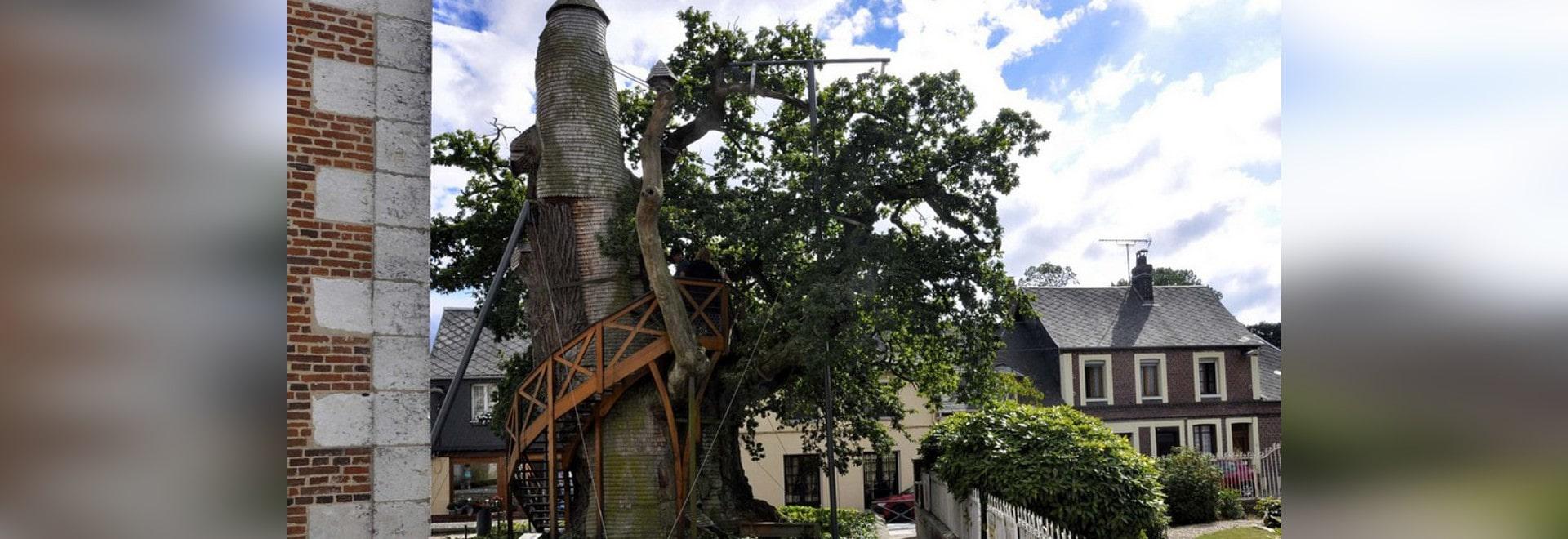 El árbol más viejo de Francia, vivo desde Louis IX, oculta capillas de la casa del árbol dentro de su tronco