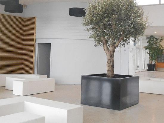 Tina del árbol para de interior - ImageIn