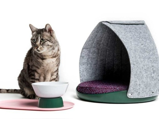 LAYER x Cat Person: Equipo moderno y adaptable para los gatos guays