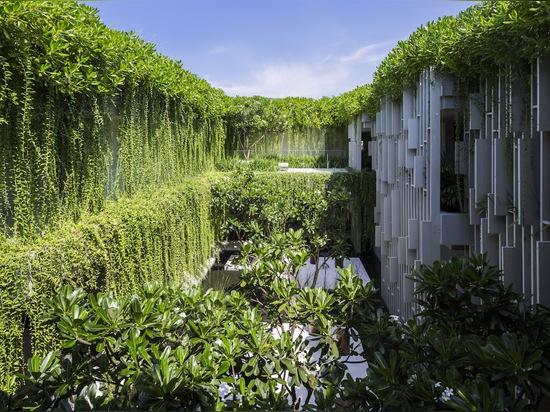 Las plantas vivas enormes engullen el balneario puro verde-cubierto en Vietnam