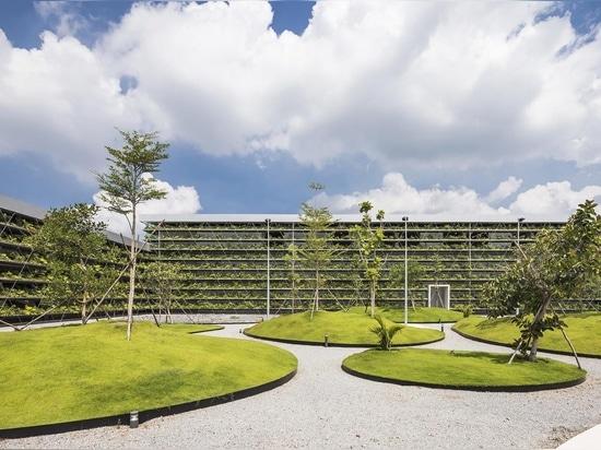 Las filas de plantas se alinean en el exterior de este edificio de la fábrica