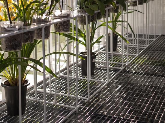 Orquídea de invernadero Punta del Este / Mateo Nunes Da Rosa